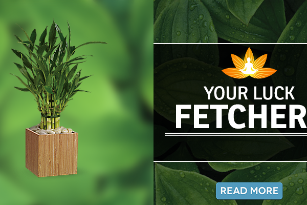 Want To Become Lucky? Plant These Cute Ones At Home
