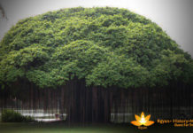 How to worship a banyan tree