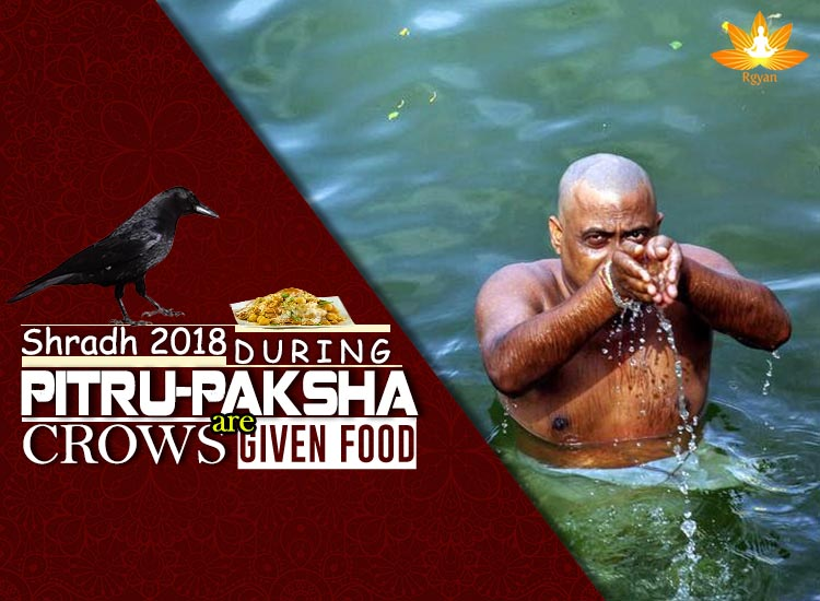 Shradh 2018 - During Pitru Paksha, Crows are given food