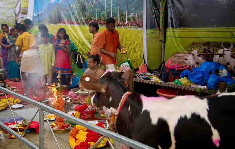 Mythology Of Pongal