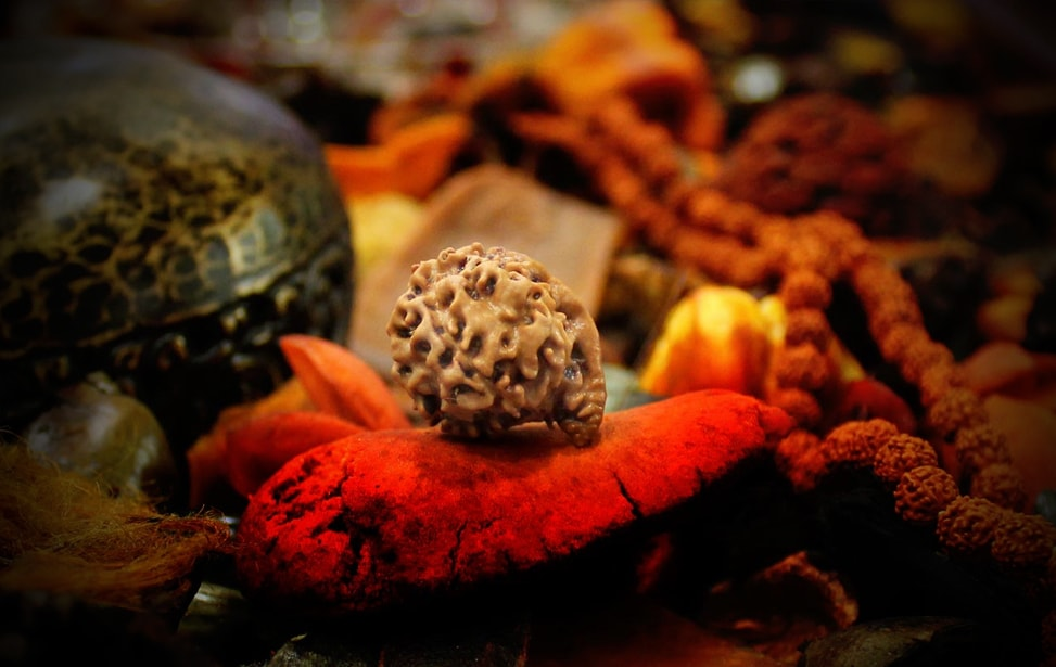 Significance of wearing Rudraksha