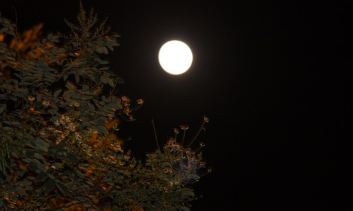 Full Moon or Nariyal Purnima